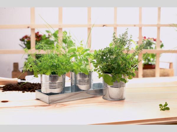 Pots en zinc avec plateau