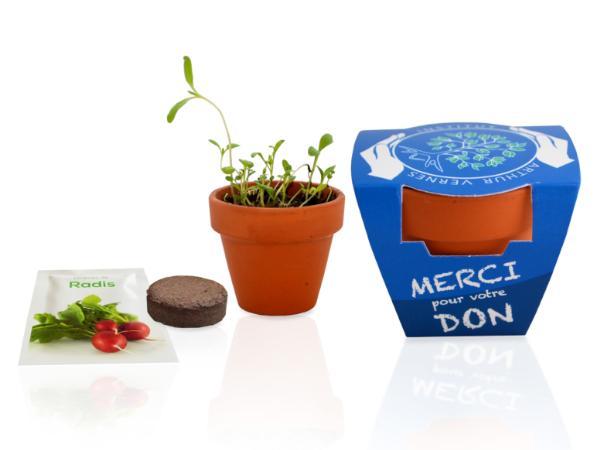 Kit de Plantation dans un Pot de Terre Cuite