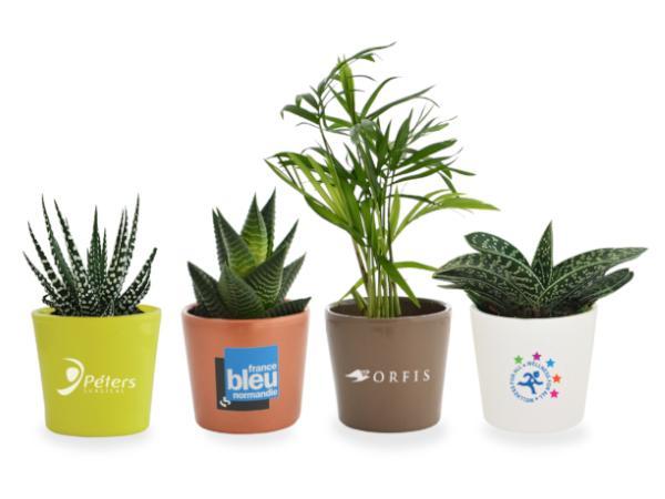 Mini Plante Dépolluante en Pot Céramique 7cm