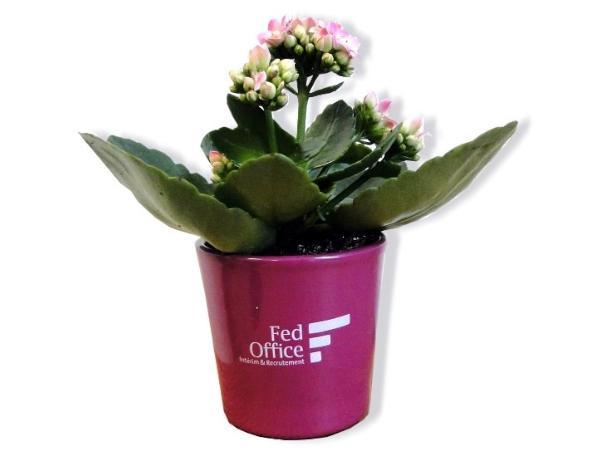 Mini Plante Dépolluante en Pot Céramique 7cm - visuel 2
