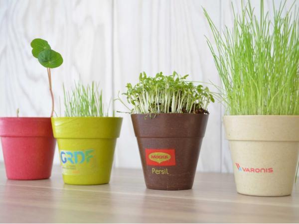 Kit de Plantation dans un Pot en Fibre de Bambou - visuel 3