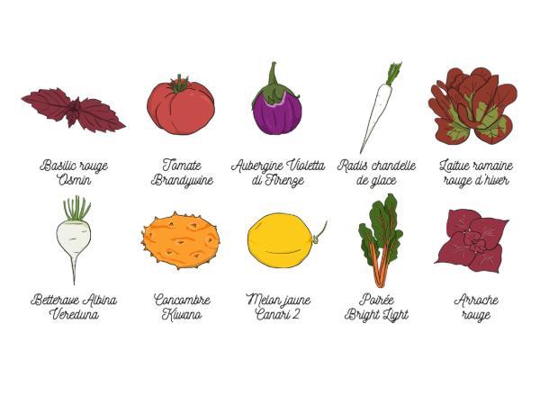 Coffret de Graines Bio Jardin Merveilleux 10 Sachets - visuel 2