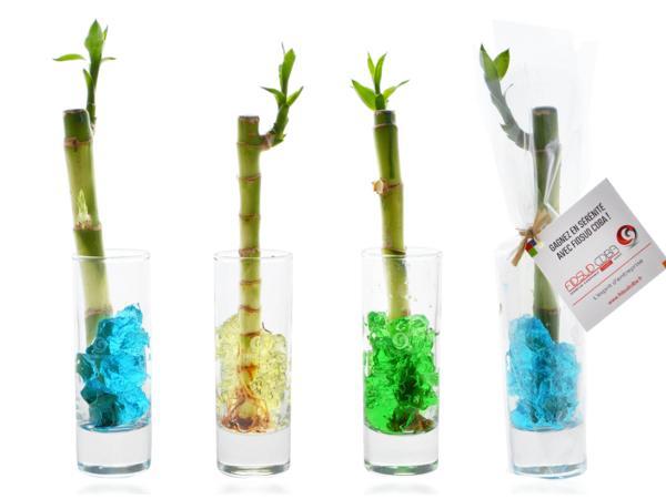 Canne Chinoise en Vase - visuel 2