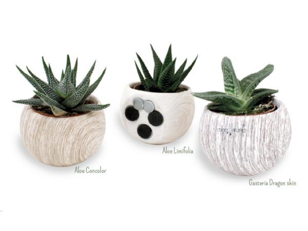 Plante Dépolluante en Pot Céramique Aimanté Aspect Bois - visuel 2
