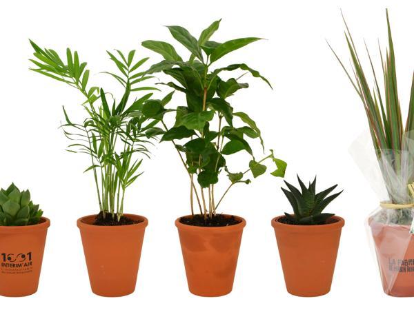 Plante Dépolluante en Pot de Terre Cuite de 10 cm - visuel 2
