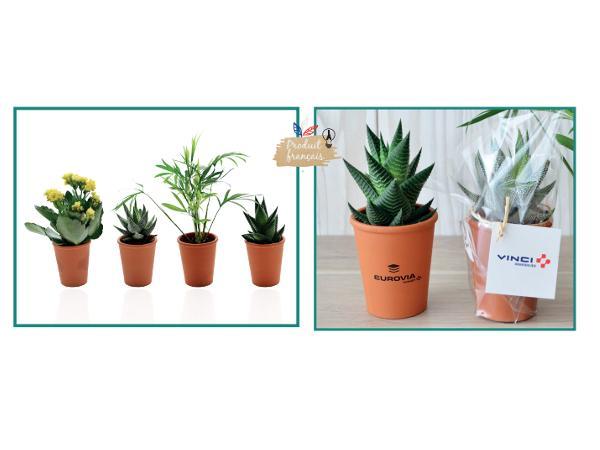 Mini Plante Dépolluantes en Pot de Terre Cuite
