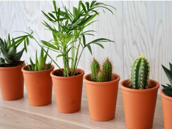 Mini Plante Dépolluantes en Pot de Terre Cuite - visuel 2