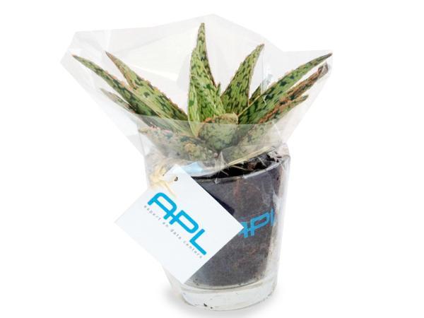 Mini Plantes Dépolluantes en Vase