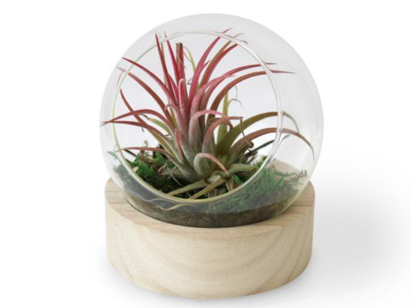 Terrarium Socle Vase
