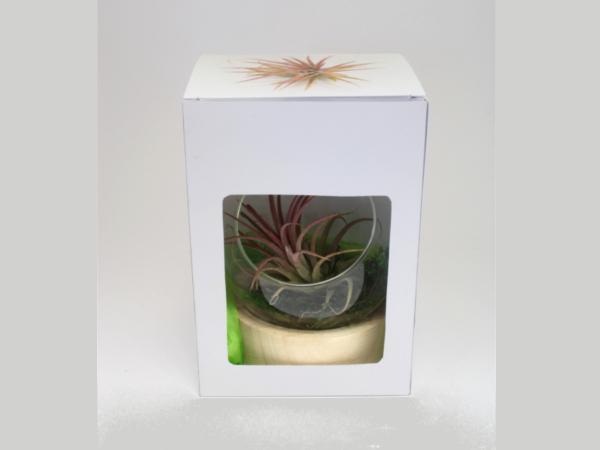 Terrarium Socle Vase - visuel 2