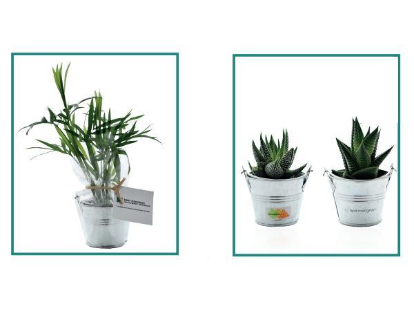 Mini Plante en Pot Zinc - visuel 2