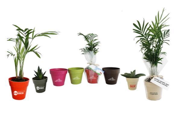 Plante Déco en Pot Bambou 10 cm - visuel 3