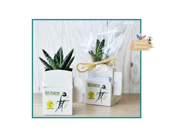 La Végétale Box avec Plante Dépolluante