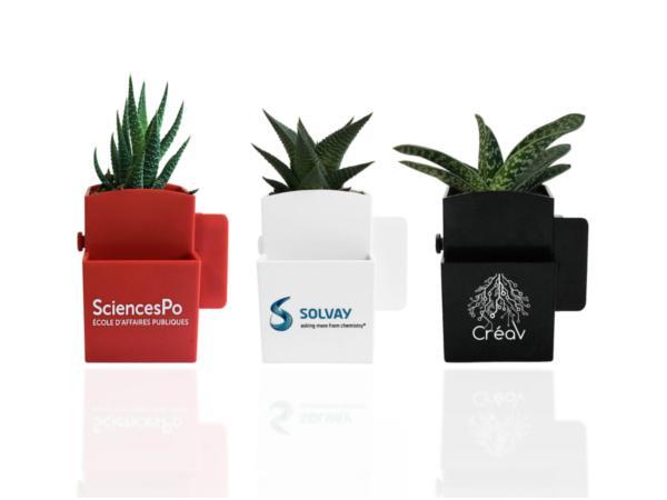 La Végétale Box avec Plante Dépolluante - visuel 2