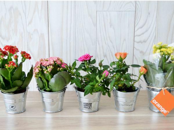 Mini Plante Fleurie en Pot en Zinc - visuel 2