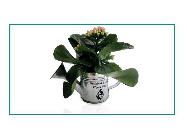 Arrosoir Zinc avec Plante Fleurie