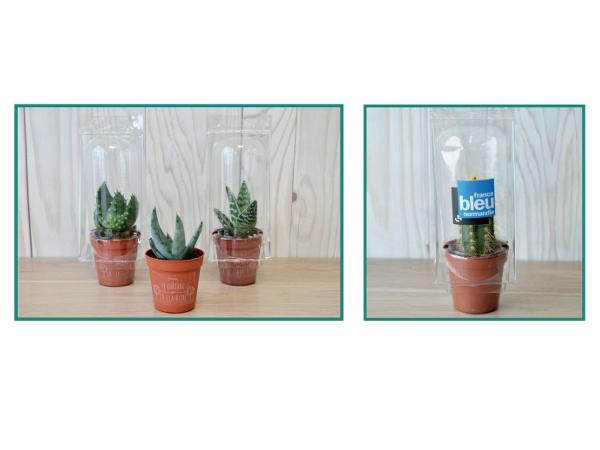 Mini Serre Pot Cactus ou Plante Succulente - visuel 1