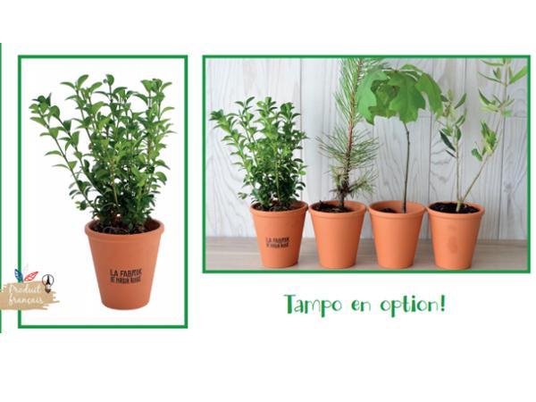Plant d'Arbre Feuillus en Pot en Terre Cuite  - visuel 1