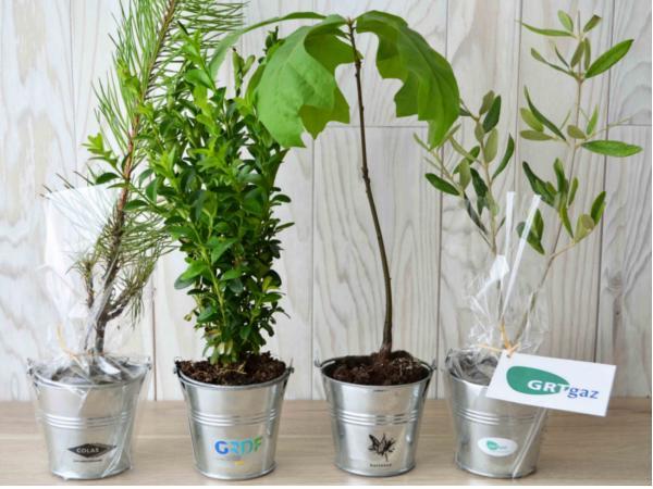Plant d'Arbre Feuillus en Pot en Zinc