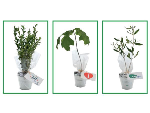 Plant d'Arbre Feuillus en Pot en Zinc - visuel 2