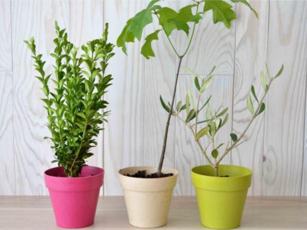 Plant d'Arbre Feuillus en Pot en Fibre de Bambou