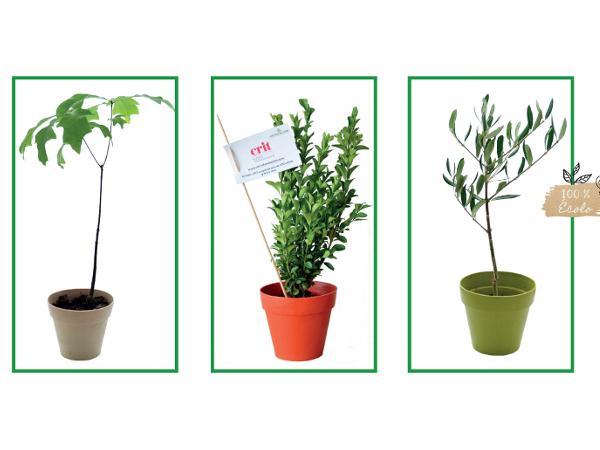 Plant d'Arbre Feuillus en Pot en Fibre de Bambou - visuel 2