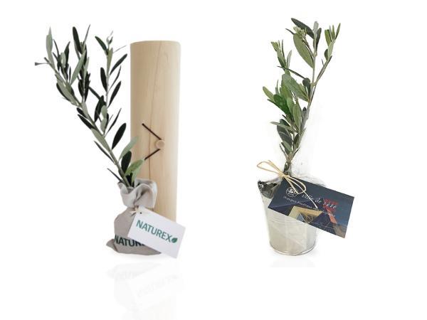 Plant d'Arbre Feuillus dans un Tube en Bois  - visuel 2