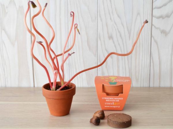 Mini Kit de Plantation Trèfle à 4 Feuilles - visuel 1
