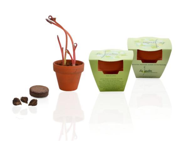 Mini Kit de Plantation Trèfle à 4 Feuilles - visuel 2