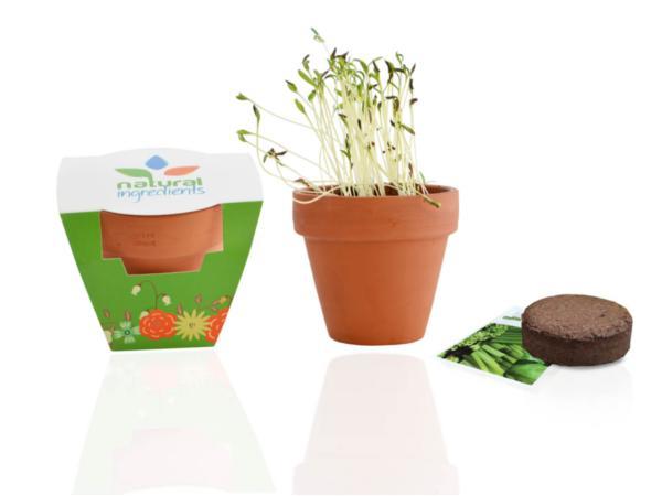 Kit de Plantation dans un Pot en Terre Cuite de 8 cm - visuel 2