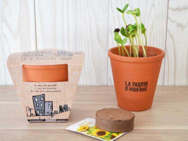 Kit de Plantation dans un Pot en Terre Cuite de 10 cm