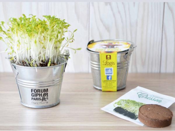 Kit de Plantation dans un Pot en Zinc de 7 cm