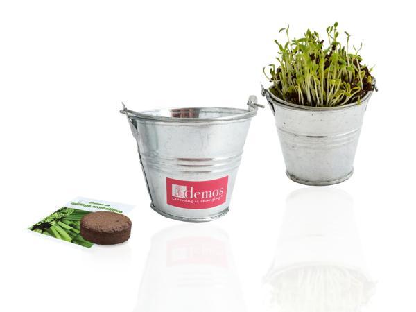 Kit de Plantation dans un Pot en Zinc de 7 cm - visuel 2