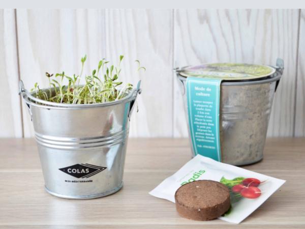 Kit de Plantation dans un Pot en Zinc de 8 cm - visuel 2
