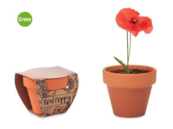 Pot en Terre Cuite avec Graines de Coquelicot