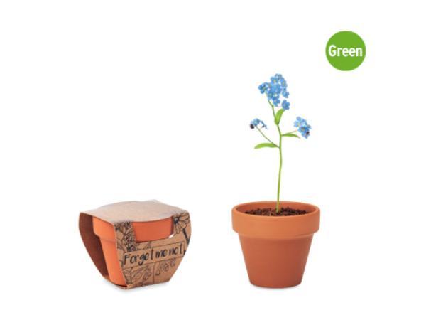 Pot en Terre Cuite avec Graines de Myosotis