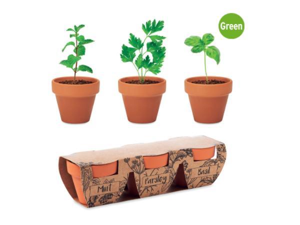 Ensemble de 3 pots en terre cuite avec des graines: Basilic, Men