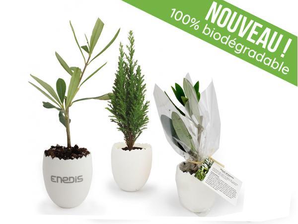 Oeuf Mini Plant d'Arbre : 100 % Biodégradable